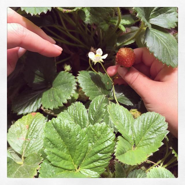 米蘭達可兒在自己的Instagram上分享自己去摘草莓