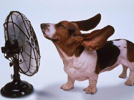 幫狗狗消暑一下