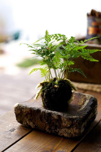 創意的居家小苔球,讓愛的小屋更可愛。