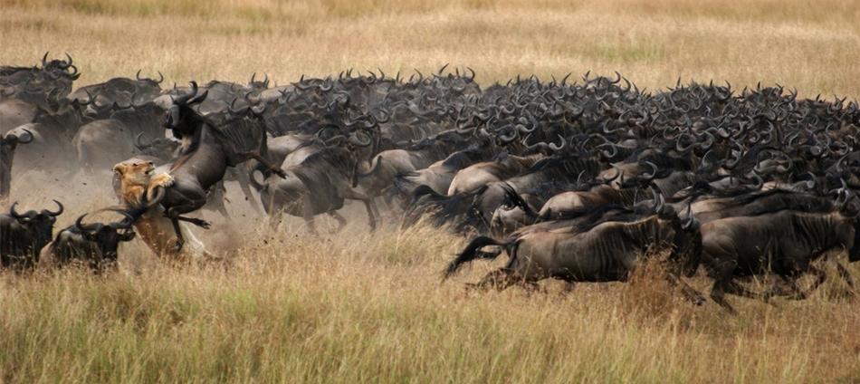 人生就該野放一次!終極探索非洲之旅